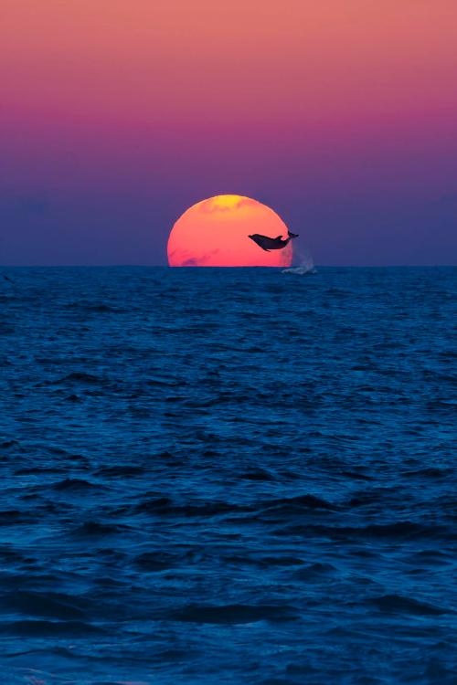dolphin_sun
