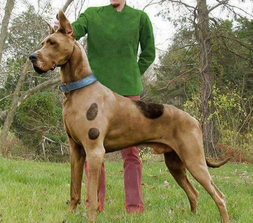 scooby_doo_photoshop