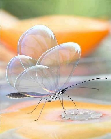 translucent_butterfly