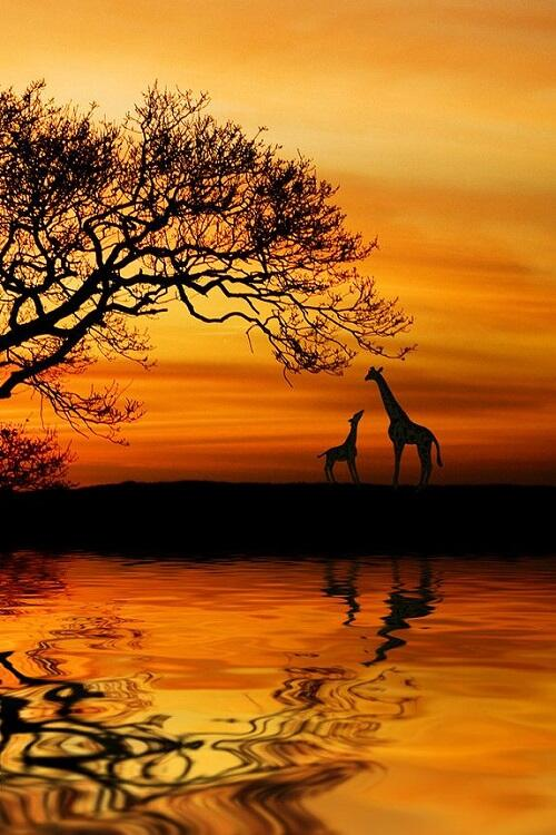 giraffes_CGI