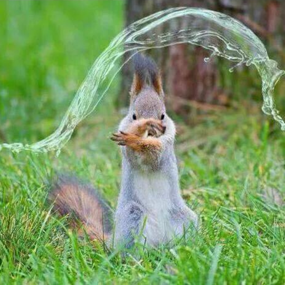 squirrel-water-fake