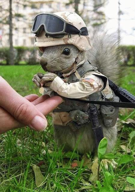captain_squirrel