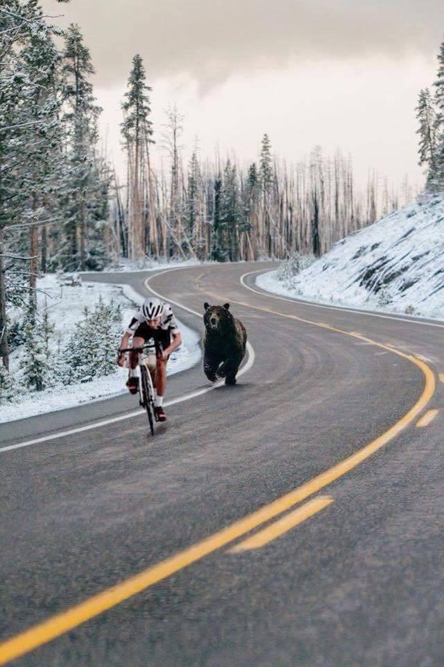 bear_fake