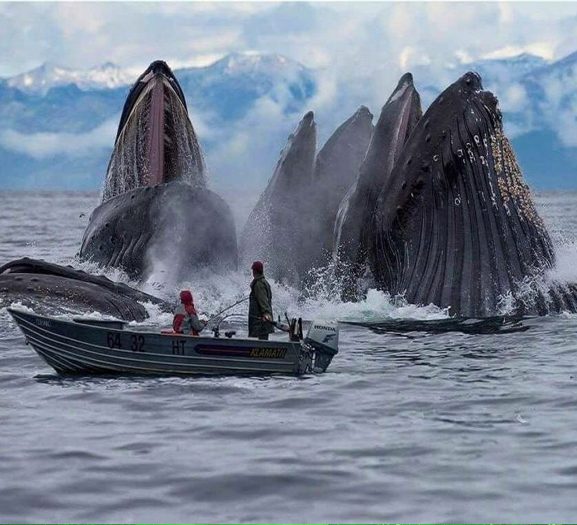 whales_photoshopped