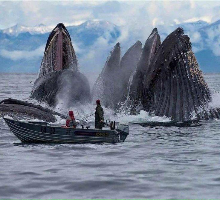 whales_photoshopped