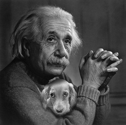 albert_einstein_dog_photoshop