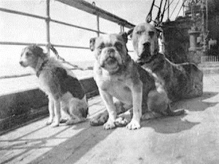 titanic-three-dogs-didnt-survive